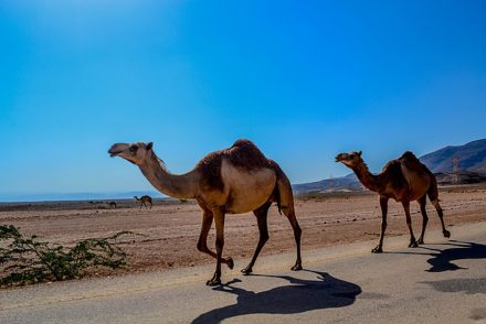 Conseils-pratiques-pour-préparer-son-séjour-à-Oman