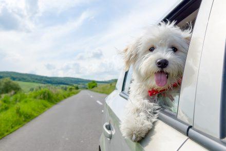 Les démarches pour acheter un chien dans un pays européen